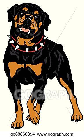 clip art vector rottweiler stock eps gg68868854 gograph rh gograph com Rottweiler Logo Rottweiler Black and White Clip Art