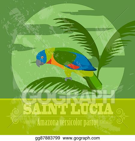 Vector Illustration - Saint lucia national symbols  amazona