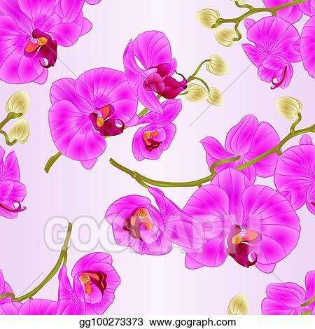 Vector Art Seamless Texture Branch Orchids Flowers Purple Phalaenopsis Tropical Plant Stem Vector Eps Clipart Gg100273373 Gograph