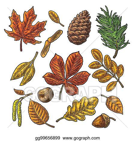 Acorn Oak Leaf Clip Art, PNG, 4284x3709px, Acorn, Autumn, Autumn Leaf Color,  Bitmap, Blog Download Free