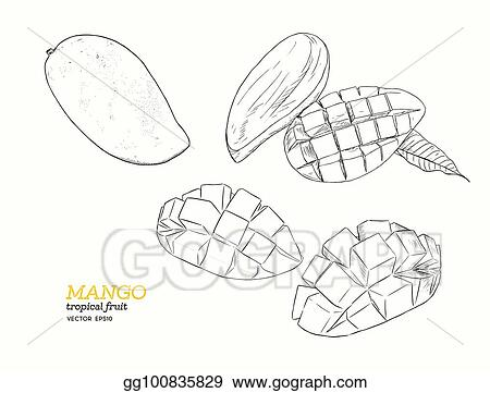 Vector Stock Set Of Mangoes Hand Draw Sketch Vector Stock Clip