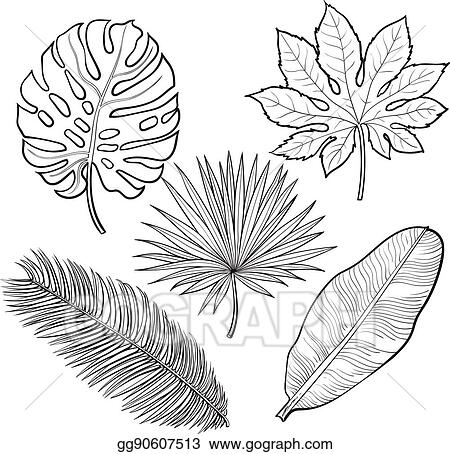 Vector Clipart Set Of Tropical Palm Leaves Sketch Style Vector Illustration Vector Illustration Gg90607513 Gograph Tropical leaves a project by ilinca. https www gograph com clipart license summary gg90607513