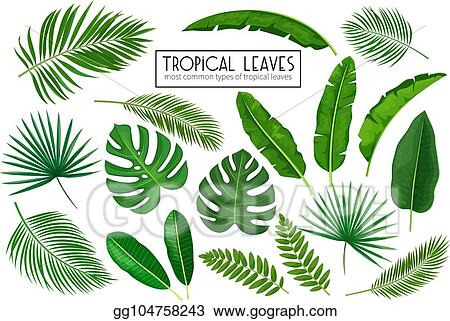Vector Art Set Tropical Leaves Clipart Drawing Gg104758243 Gograph Leaf tropics drawing, hand painted green tropical leaves pattern, green feathers illustration png clipart. https www gograph com clipart license summary gg104758243
