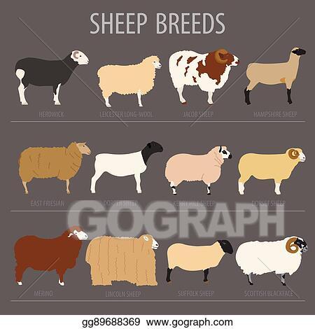 Clip Art Vector - Sheep breed icon set  farm animal  flat