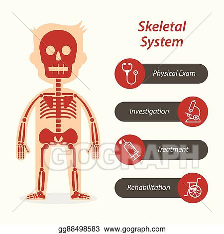 Vector Illustration Skeletal System And Medical Line Icon Eps