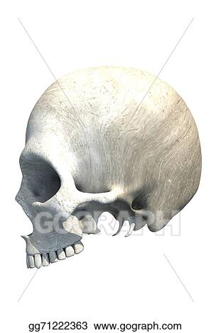 Drawing Skull With No Jaw Isolated Clipart Drawing Gg71222363