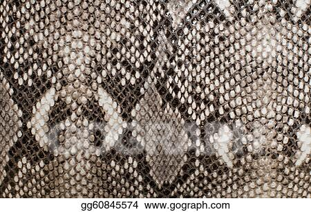 Drawing Snake Skin Texture Clipart Drawing Gg60845574 Gograph