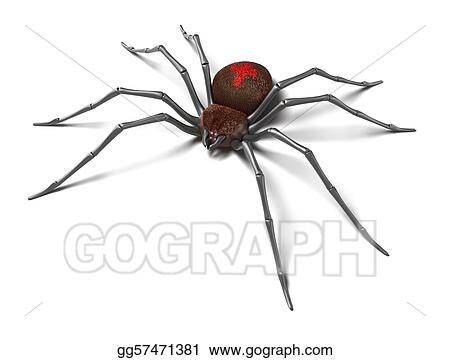Drawing Spider Black Widow Isolated Clipart Drawing