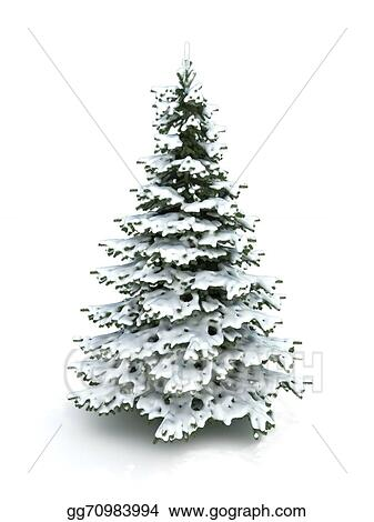 Drawing Spruce Tree Christmas Tree Clipart Drawing
