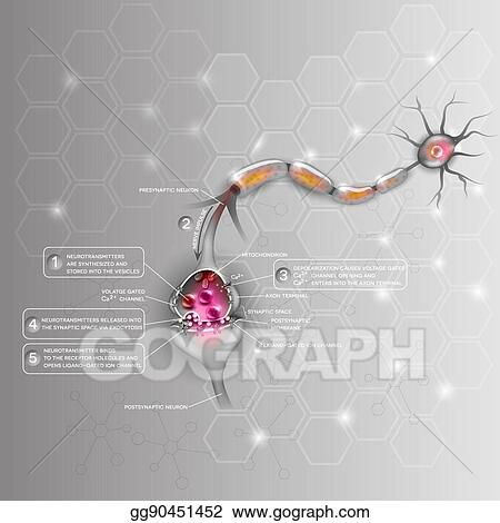 Vector Art - Synapse detailed anatomy, beautiful colorful ...