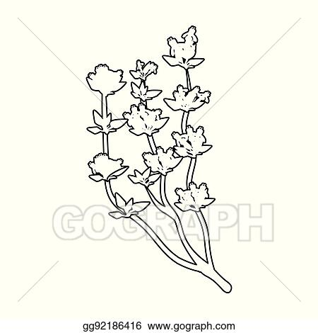 clip art vector the mongolian medicinal plant artysh symbol of Mongolian Food the mongolian medicinal plant artysh symbol of mongolia mongolia single icon in outline style vector symbol stock illustration