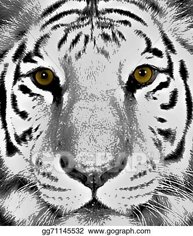 Stock Illustration Tiger Eyes Clipart Drawing Gg71145532 Gograph