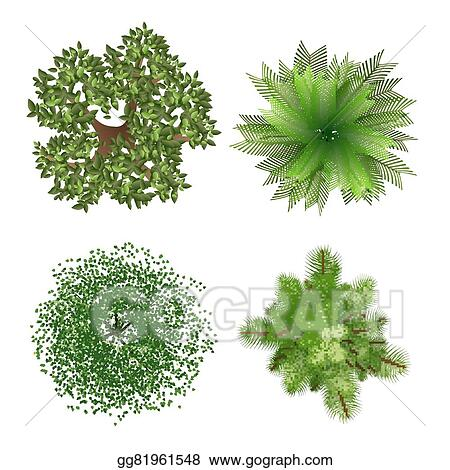Tree Top View Clip Art Royalty Free Gograph