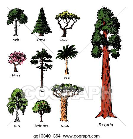 Vector Art Tree Types Vector Green Forest Pine Treetops Collection