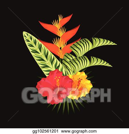 Vector Art Tropical Flowers Black Background Clipart Drawing Gg102561201 Gograph Hand painted illustration isolated on white background. tropical flowers black background