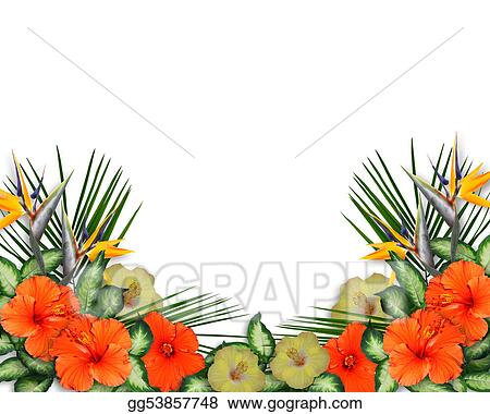 Clip Art Tropical Hibiscus Flowers Border Stock Illustration