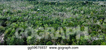 stock photo tropical rainforest background stock photos