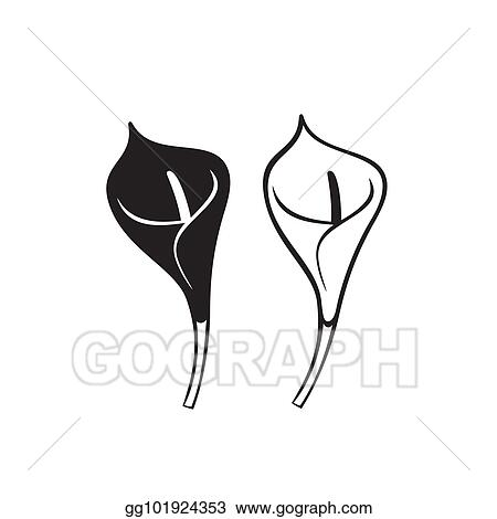 Clip Art Vector Vector Calla Lily Flower Isolated On White
