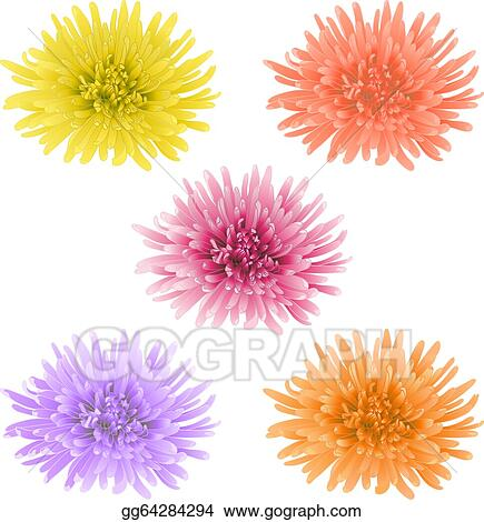 Vector Art Vector Chrysanthemum Flower Eps Clipart Gg64284294