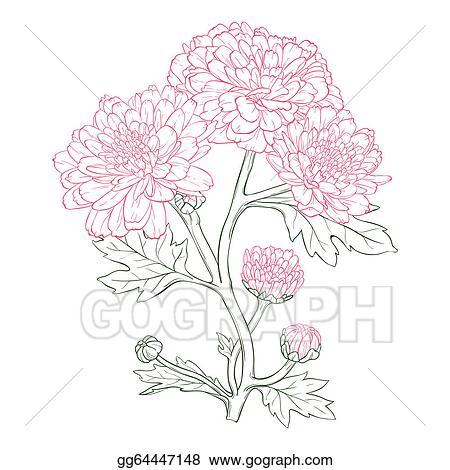 Vector Art Vector Chrysanthemum Flower Eps Clipart Gg64447148