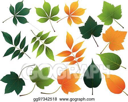 Fall leaves simple. Eps illustration vector autumn