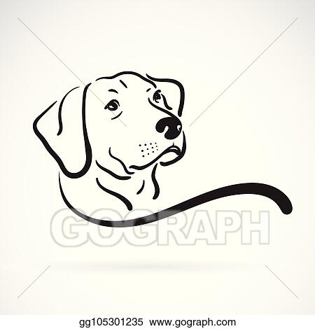 Vector Stock Vector Of Labrador Dog Head Design On White
