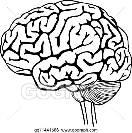 vector illustration vector outline illustration of human brain rh gograph com human brain clip art black and white human brain clip art black and white