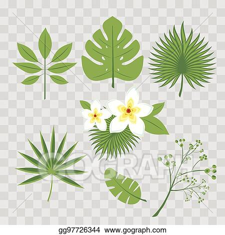 Palm Leaf Banana Hibiscus Plumeria Flowers Jungle TreesBotanical Floral Illustration Set Of Vector Trendy Illustrations Isolated On Transparent