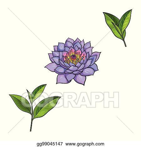Vector Art Vector Sketch Lotus Flower Tea Leaves Set Clipart