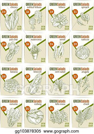 Vector Stock - Vector sketch price cards for salads vetables