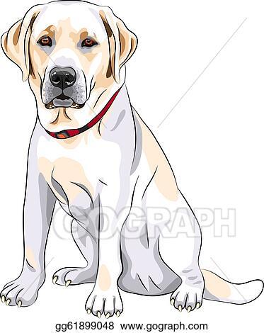 labrador retriever clip art royalty free gograph rh gograph com labrador retriever clip art labrador retriever clip art