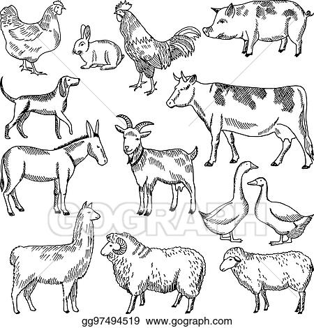 Image of: Vintage Vintage Farm Animals Farming Illustration In Hand Drawn Style Gograph Vector Art Vintage Farm Animals Farming Illustration In Hand