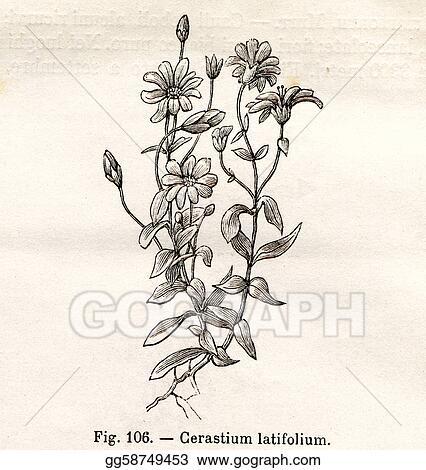Drawings , Vintage flowers illustrations. Stock Illustration