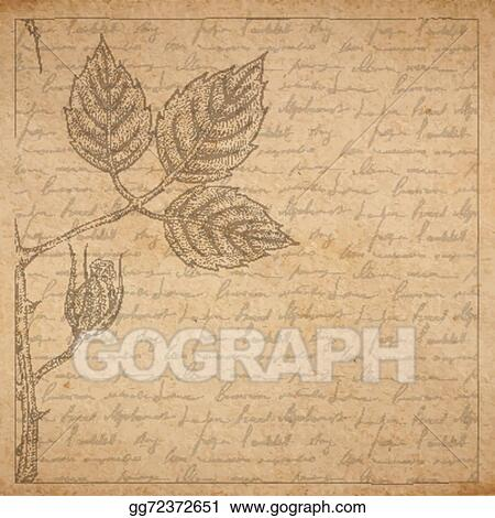 Vintage Old Paper Texture With Frame And Engraved Slyle Rose Twig Handwriting Letter Poems Background Scrapbooking Victorian Style Page