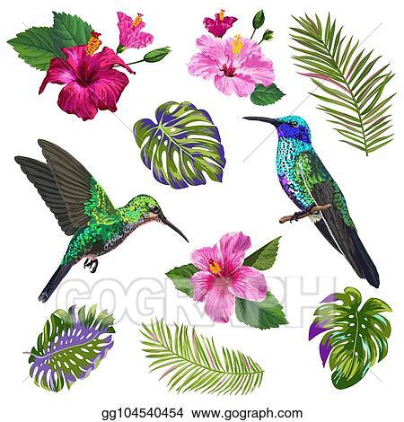 Vector Illustration Watercolor Hummingbird Hibiskus Flowers And