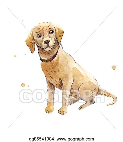 Vector Art - Watercolor labrador  hand drawing a labrador puppy