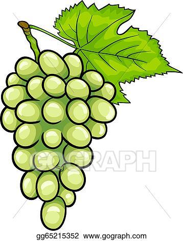 Vektor Clipart Weisse Trauben Frucht Karikatur Abbildung Vektor Illustration Gg65215352 Gograph