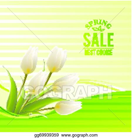 Vector illustration white tulip spring flowers bouquet for sale white tulip spring flowers bouquet for sale vector illustration mightylinksfo