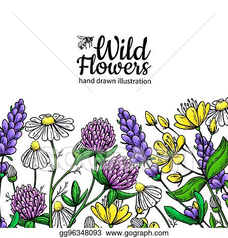 Wild Flowers Vector Drawing Set Isolated Meadow Plants And Leaves Herbal Artistic