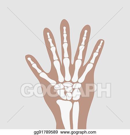 Vector Art - Wrist hands bones. Clipart Drawing gg91789589 - GoGraph