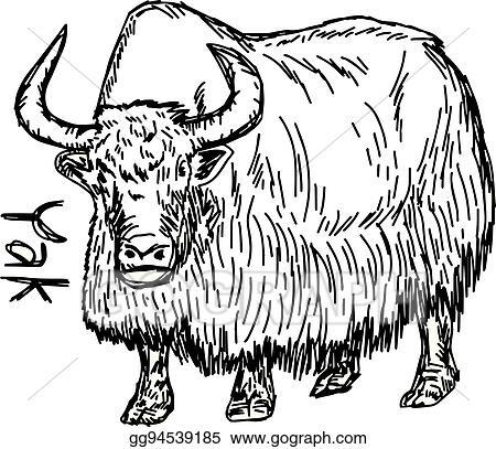 Vector Art Yak Vector Illustration Sketch Hand Drawn With Black