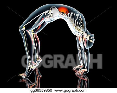 stock illustration  yoga  urdhva dhanurasana stock art